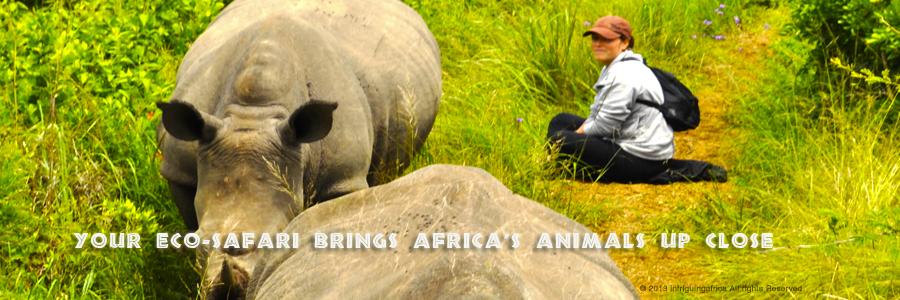 rhinos-eco-safari